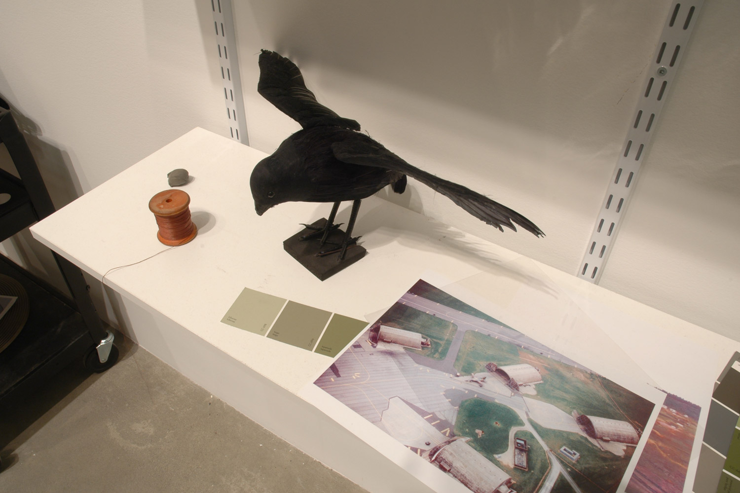 Crow with Spool of Thread